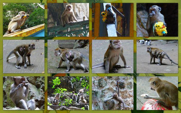 08-2013-Malaisie-KL-singes-verts2-copie-1.jpg