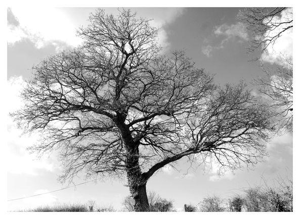 crasville-arbre-010-nb