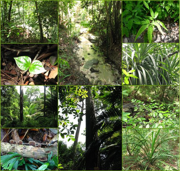 08-2013-Malaisie-BatuFerringhi-J5-Jungle5