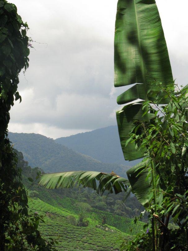 Malaisie-2013-3443.JPG