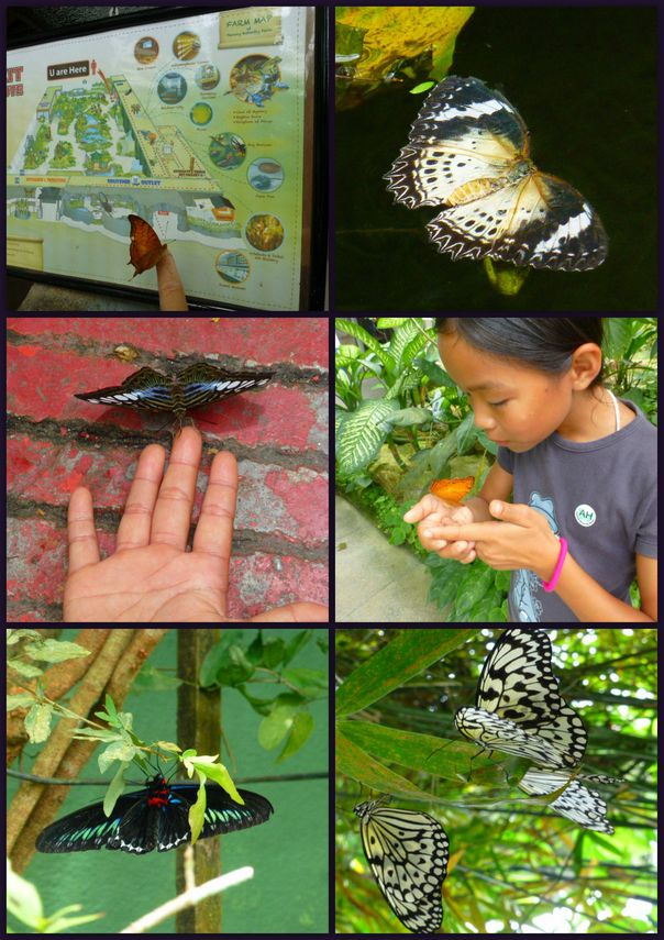 08-2013-Malaisie-BatuFerringhi-J6-Papillon4