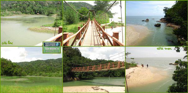 08-2013-Malaisie-BatuFerringhi-J5-Jungle6.jpg