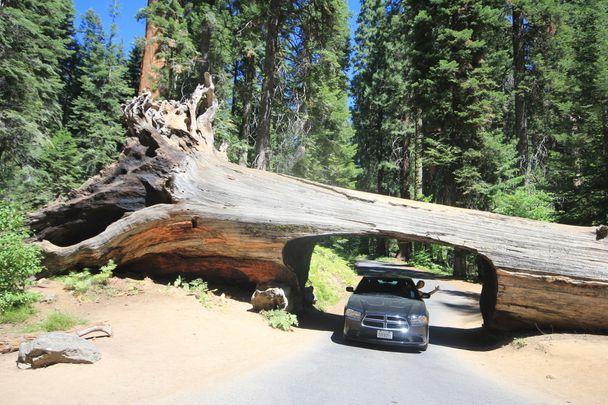 California-2013-suite 5606