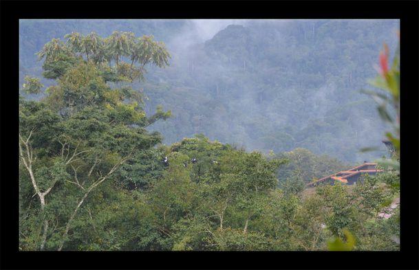 Rwanda-forest lodge 02