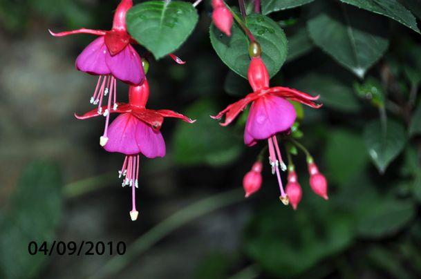 fleur-020-copie-1.jpg