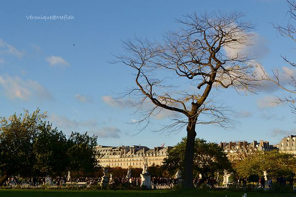 La photo du weekend Les Tuileries