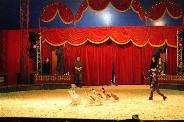 Festival-Arts-du-cirque-1336.JPG