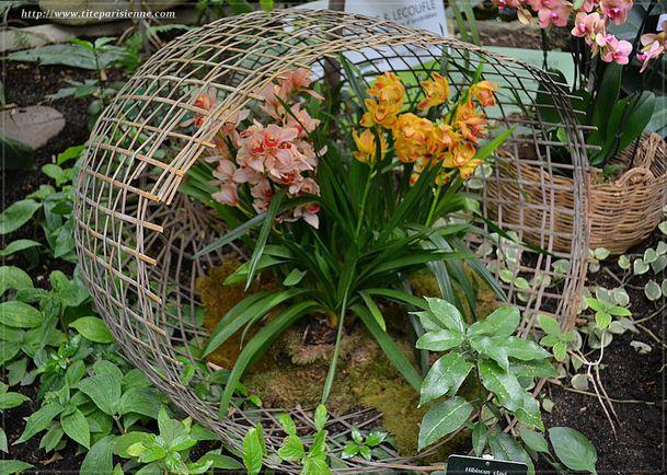 Orchidées Jardin des Plantes 3
