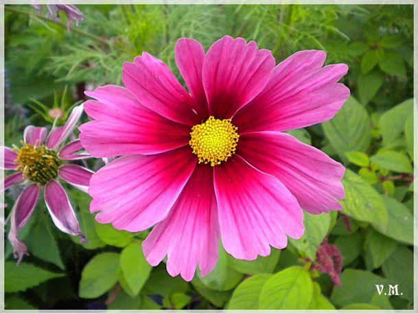 Encyclop die des fleurs et plantes de jardin trouvez le for Achat plante jardin