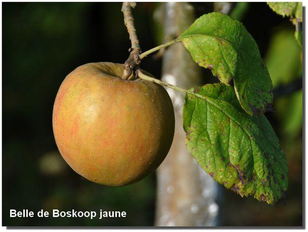 2013-10-Boskoop-0024