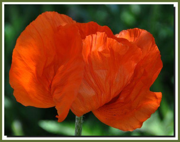 Fleurs-052012-0011-010