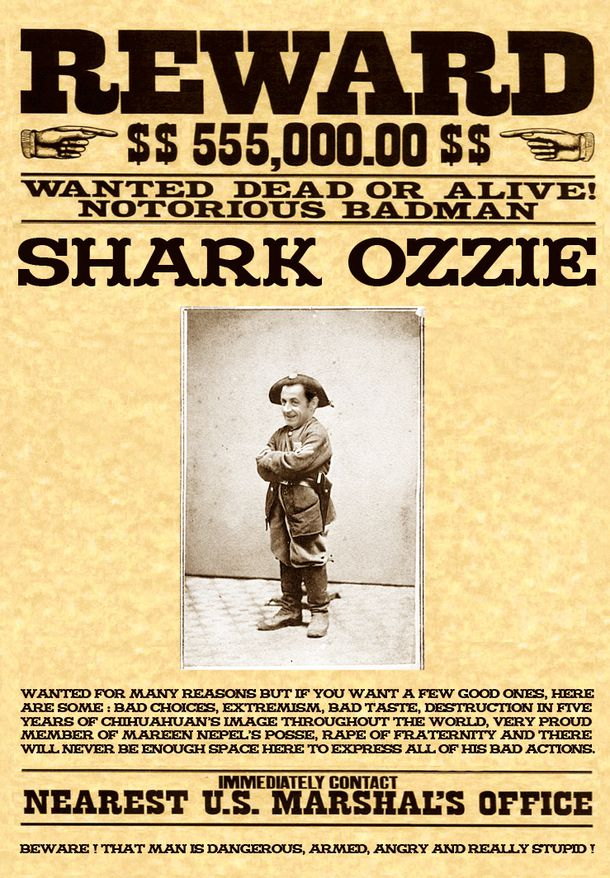 WANTED-SHARK.jpg
