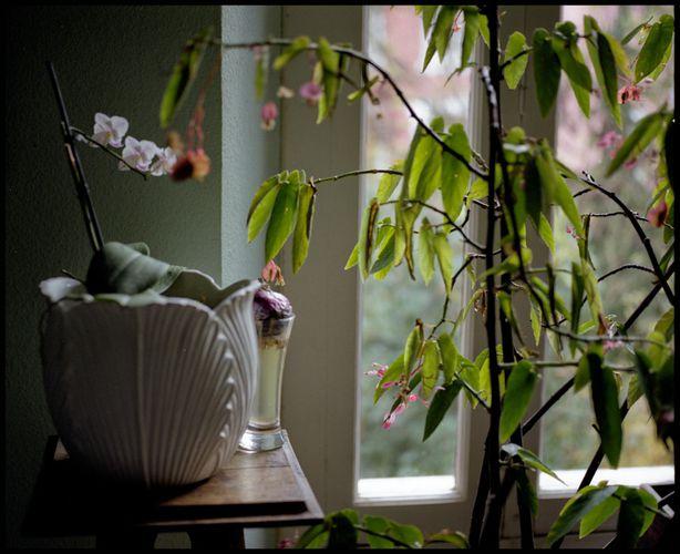 Intérieur orchidée