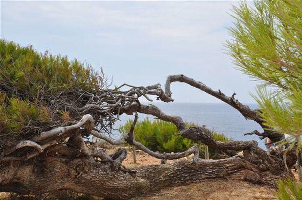 arbres 0132