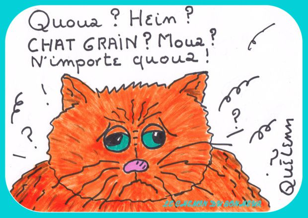 dessin-de-chat-humour-1.jpg