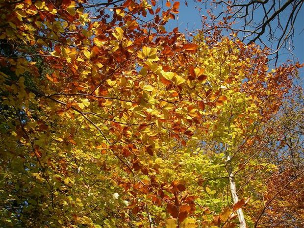 couleurs d'automne (9)