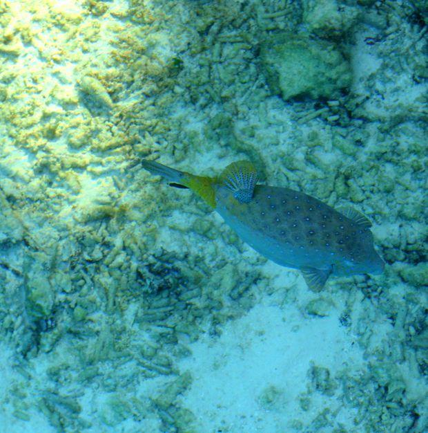 MALDIVES ENFANTS 2009 2 009
