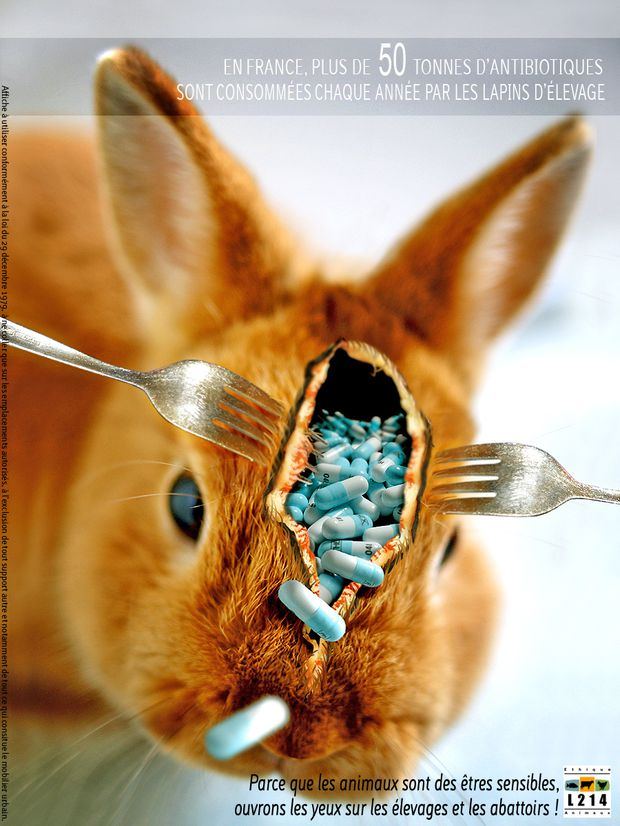 affiche-lapin-antibiotique-Joan-2010-HD.jpg