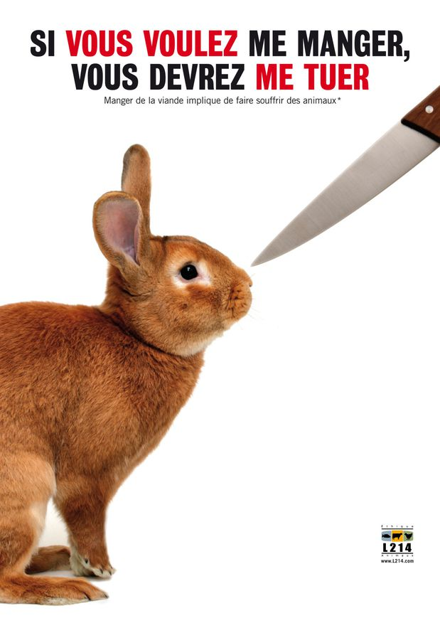 affiche-lapin1