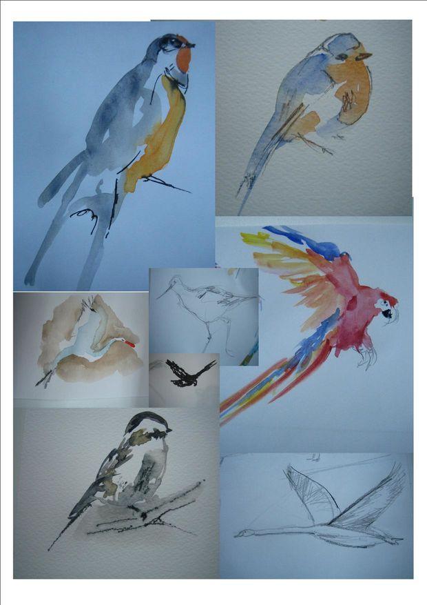 Croquis oiseaux