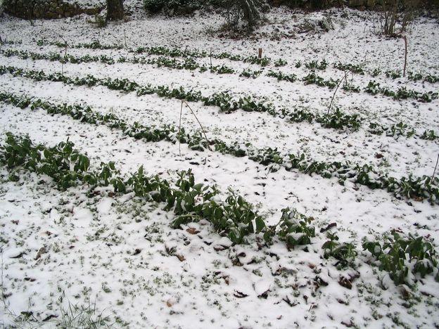 neige janv 2010 1 (3)
