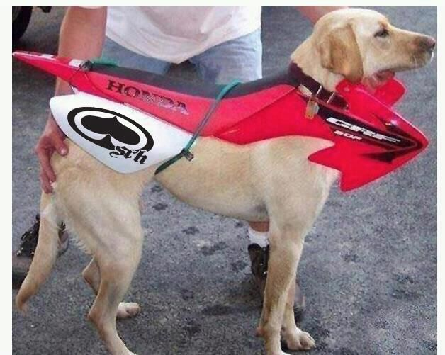 scooter-dog.jpg