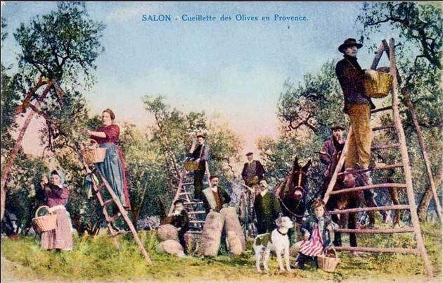 Cueillette-des-olives-9.jpg