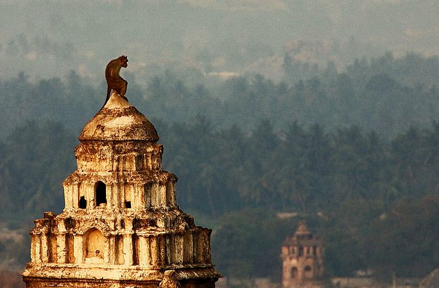 Hampi-monkey thinker-800