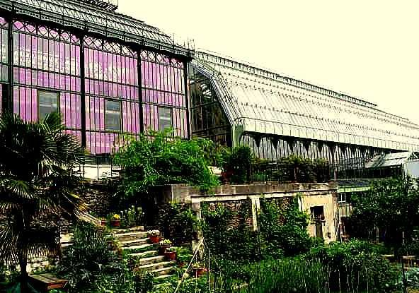 Jardin de Plantes2-607-G10549