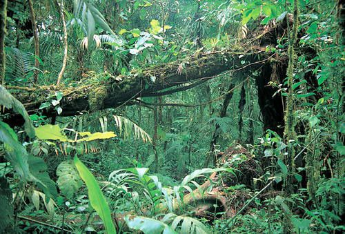 rainforest-undergrowth.jpg