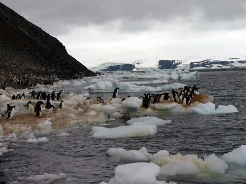 035-antarctique-paulet-island-pingouins-glace.jpg