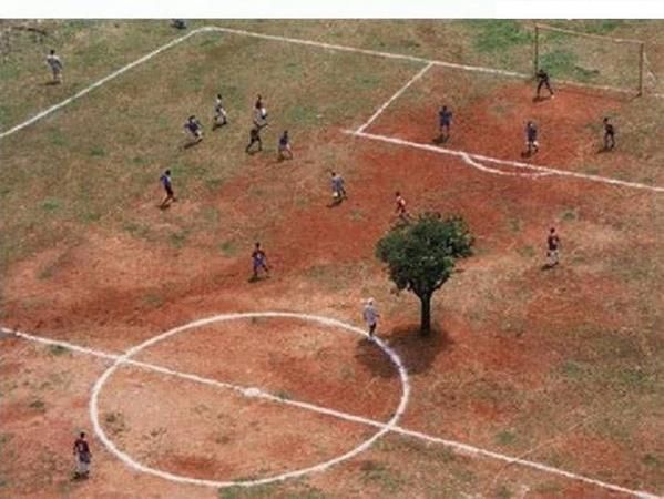 India Soccer Field with Tree On It Picture