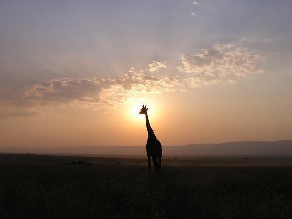 R-serve-Masai-Mara--1-.jpg