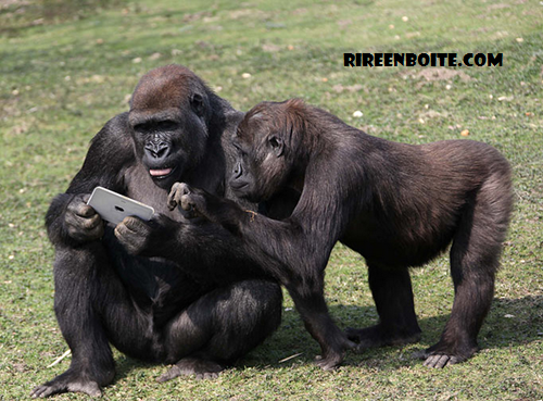 singes vs tablette