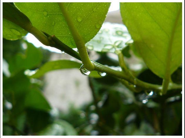 Dans mon jardin, un jour de pluie.