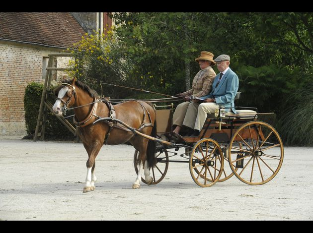892 Jennifer SEYMOUR (G-B) . Un poney Welsh Gelding à un Dog Cart, Carpenter of Staines