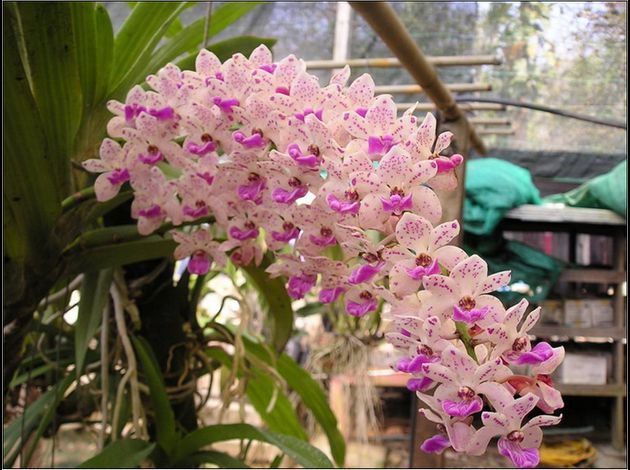 jardin-thailandais-dix-vingt-et-un-orchidee.jpg