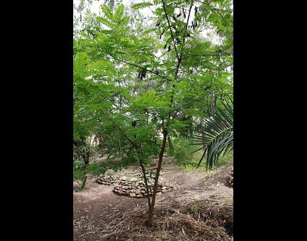 Nouara alg rie environnement et ecologie ecologie for Plante un arbre