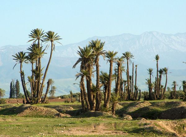 De fs  Marrakech - Palmeraie de Marrakech et montagnes 