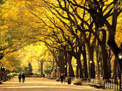 Central-park-new-york-city-ny-usa-1