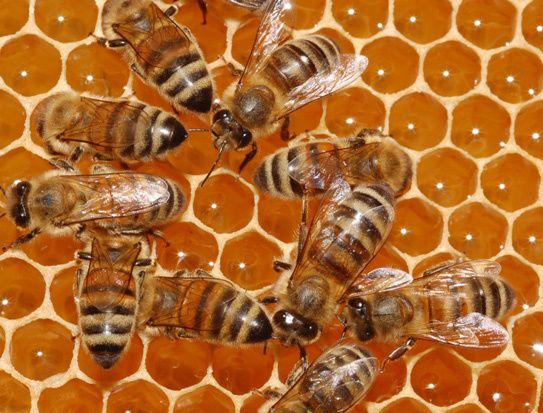 miel&abeille