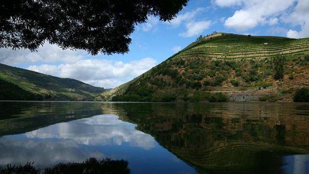 005748-01-vineyards-on-hill.JPG
