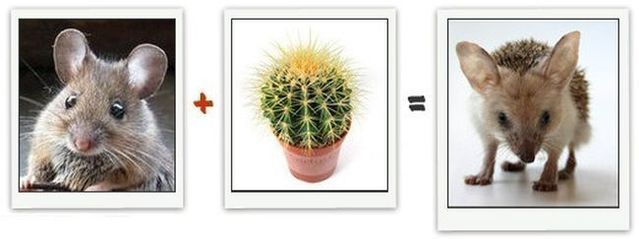 math addition cactus