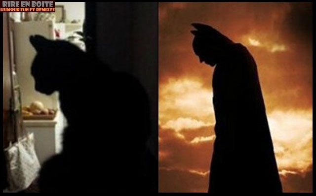 mon-chat-vs-batman.jpg