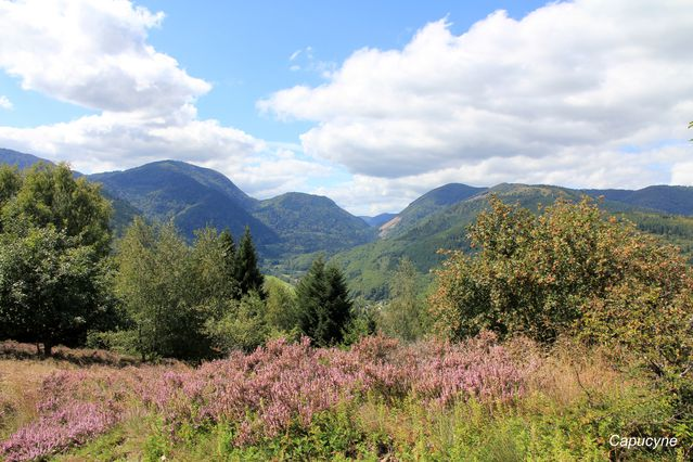 Vosges 2983