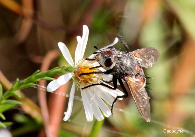 insectes 3708