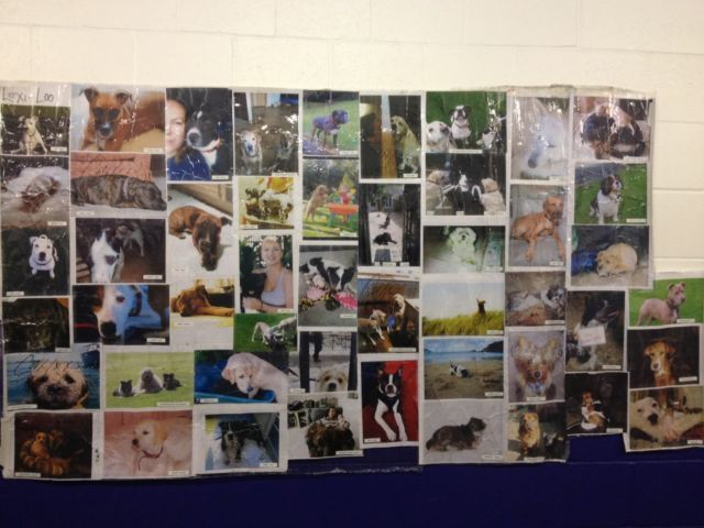 SYMPHONICA DOG WALL