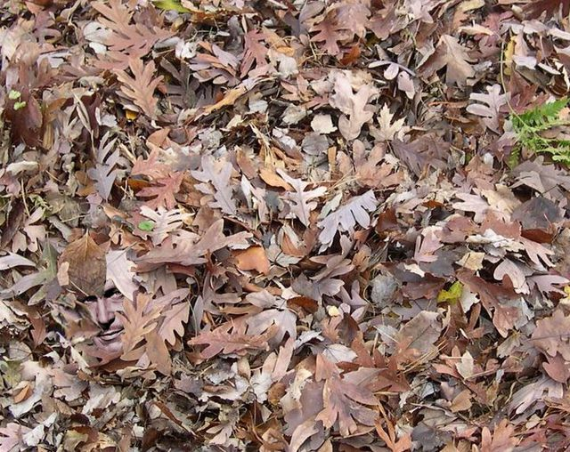 Vincent-Price-Pile-of-Leaves.JPG