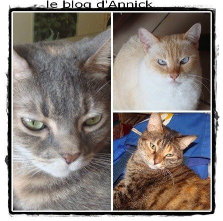 chats-caprice