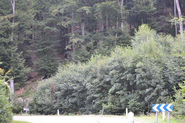 2013-08-12-Vosges 0245